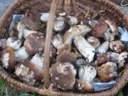 Les champignons de Burdignes